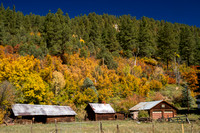 San Juan Skyway, Dolores R Valley, Fall Foliage131-8389