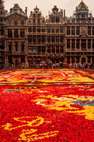 Brussels, Grand Place, Flower Carpet S V-9936