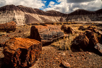 Petrified Forest NP S -3180