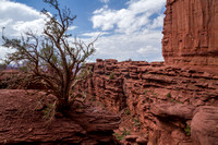 Moab, Fisher Towers Tr131-6860