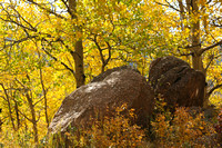 Pikes Peak Area, Gold Camp Rd, Aspens0742632
