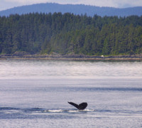 Frederick Sound, Whale, Tail020706-4030a