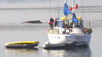 Frederick Sound, Whale, Boat020706-4059a