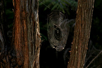Hahei, Cathedral Cove, Spider Web0732312