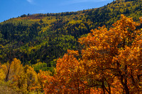 San Juan Skyway, Dolores R Valley, Fall Foliage131-8393