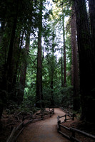 Muir Woods National Monument, Trail