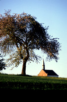 Scheildweiler, Church, Tree, a, V