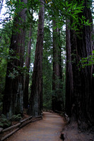 Muir Woods National Monument, Redwoods, Trail