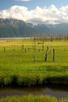 Turnagain Arm, Drowned Forest V0577799