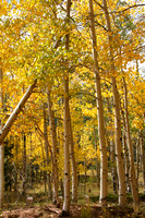 Pikes Peak Area, Gold Camp Rd, Aspens V0742488