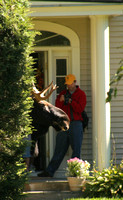 Moose Pops in for a Visit in Hanover, NH