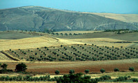 Andalucia, Countryside, Rt A44 1034411a