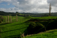 Waitomo, Countryside0731913