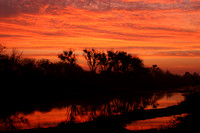 Firebaugh, San Joaquin River, Sunrise0615143