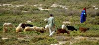 Northern Tunisia, Shepherds1025939a