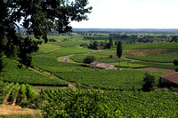 St Emilion Area, Vineyards1037196a