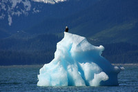Le Conte Bay, Iceburg, Bald Eagle0817920
