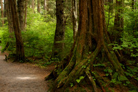 Sitka NHP, Forest Trail0819706