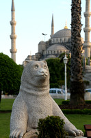 Istanbul, Blue Mosque, Bear V1015601