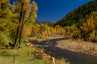San Juan Skyway, Dolores R Valley, Fall Foliage131-8373