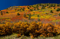 San Juan Skyway, Dolores R Valley, Fall Foliage131-8360