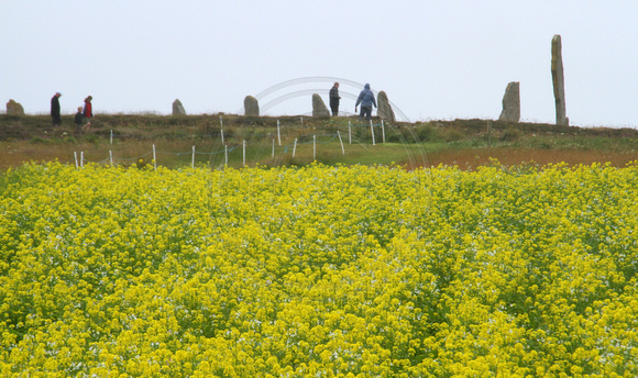 Orkney Islands, Ring of Brodgar1039928a