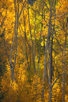 Independence Pass Rd, Aspens V0741046a
