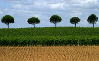 St Emilion Area, Vineyards1037040a